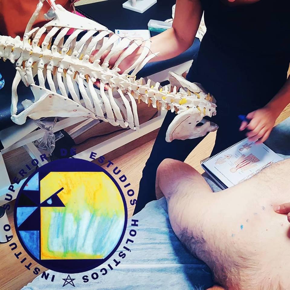Anatomía aplicada al Quiromasaje